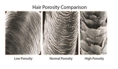 Curly Hair Care Archives Ashba Botanics